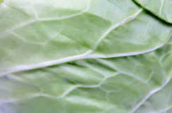 Texture of a green cabbage Royalty Free Stock Image