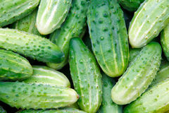 Texture of green cucumbers Royalty Free Stock Photography