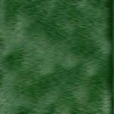 Texture of green grass Stock Photos