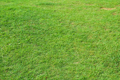 Texture of green grass in the garden Stock Images