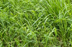 The texture of the Green grass on the lawn. View from above. stock image