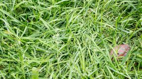 The texture is green grass Royalty Free Stock Photo