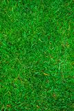 Texture of green grass on the whole frame Stock Photos