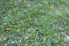 Texture with green grass and yellow leaves. Autumn background royalty free stock photo
