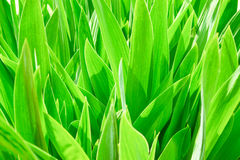 Texture of a green high grass. On a bright day Stock Photography