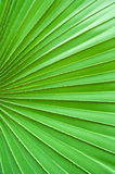 Texture of green leaf Stock Image