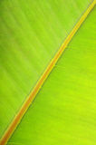Texture of a green leaf Royalty Free Stock Images
