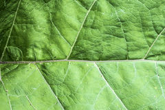 Texture of a green leaf as abstract background macro plant pattern Stock Image