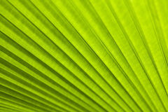A green leaf as background Stock Image