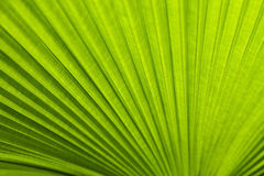 A green leaf as background Stock Photos