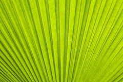 A green leaf as background Royalty Free Stock Image
