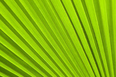 A green leaf as background Royalty Free Stock Photos