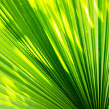 Texture of a green leaf as background Stock Photos
