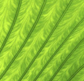 Texture of a green leaf. As background Royalty Free Stock Photography