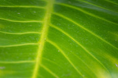 Texture of a green leaf as background. Stock Photo