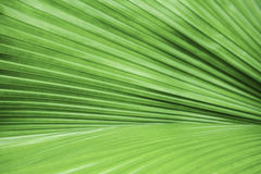 Texture of a green leaf as background Royalty Free Stock Photo