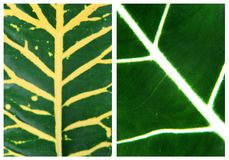 Green leaf backgrounds patterns Royalty Free Stock Photography