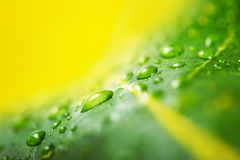 Texture of a green leaf and water drops as background Stock Image