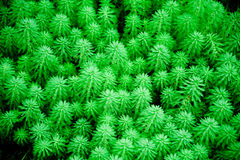 Texture of green leafs Stock Photography
