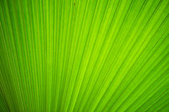 Texture of green leave Stock Images