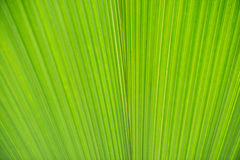 Texture of green leave Royalty Free Stock Photos