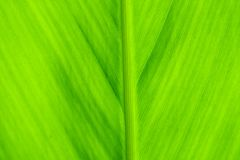 Texture of green leaves for background. royalty free stock photos