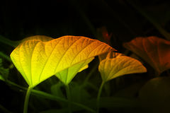 Texture of green leaves, filtered image Stock Photo