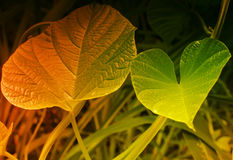 Texture of green leaves, filtered image Stock Photos