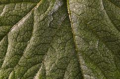 Texture of green leaves fresh background. stock image