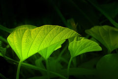 Texture of green leaves Stock Photo