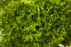 Texture of green lettuce Stock Photos