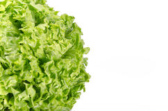 Texture of spring green lettuce leaves isolated on a white backg Royalty Free Stock Photo