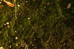 Texture of green moss with some rubbish on it.  Royalty Free Stock Photos
