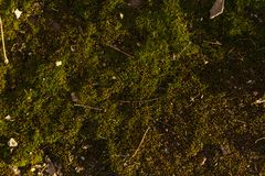 Texture of green moss with some rubbish on it.  Stock Photography