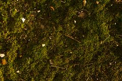 Texture of green moss with some rubbish on it.  Royalty Free Stock Images
