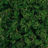 The texture of green moss. royalty free stock photos