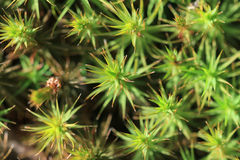 Texture of  green moss Stock Image