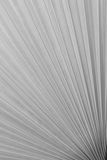 Texture of Green palm Leaf on softlight monotone Stock Photo