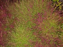 Plant green with pink royalty free stock images