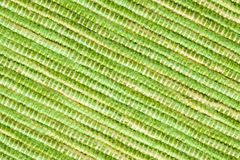 Texture of green placemats Royalty Free Stock Photography