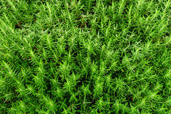 Texture of Green Plant Stock Photo