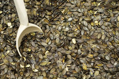 Texture of green pumpkin seeds Royalty Free Stock Photography