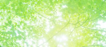 Texture of green tree leaves. stock images