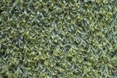 Artificial Hedge Garden Green Wall Plant