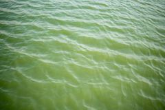Texture of  green water surface. Environment photos concept. Texture of water surface. The polluted green water in canal Stock Photography