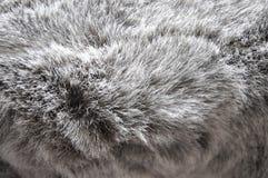 Texture of Grey Fibers Fabric Royalty Free Stock Image