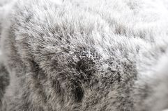 Texture of Grey Puffy Fabric Background Stock Photography