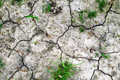 Texture of grey withered earth with cracks and green grass Royalty Free Stock Image