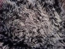 Texture grise de fourrure Photographie stock libre de droits