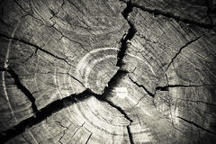 Texture of growth rings tree Stock Photography